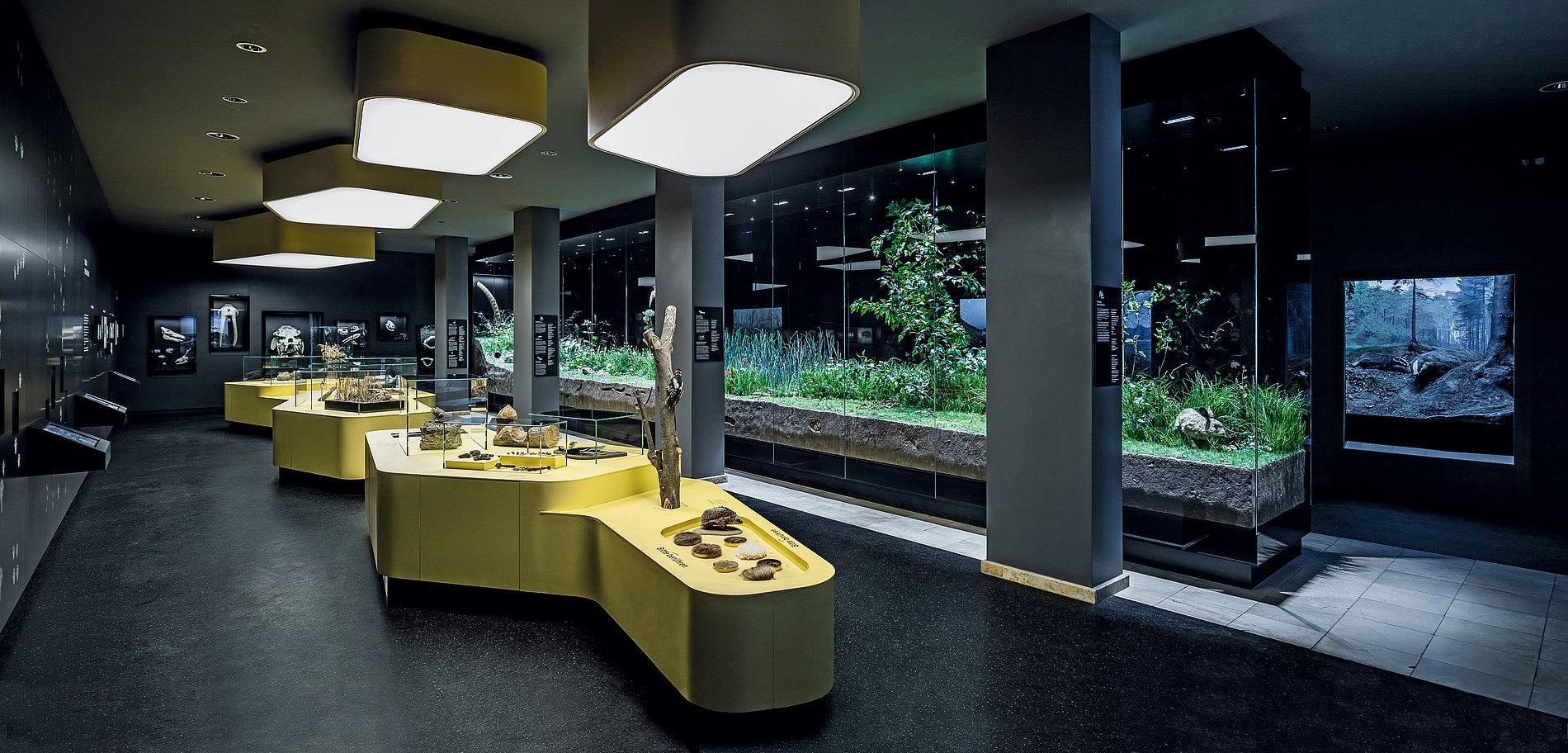 Staatliches Naturhistorisches Museum Braunschweig | Red Dot Design Award
