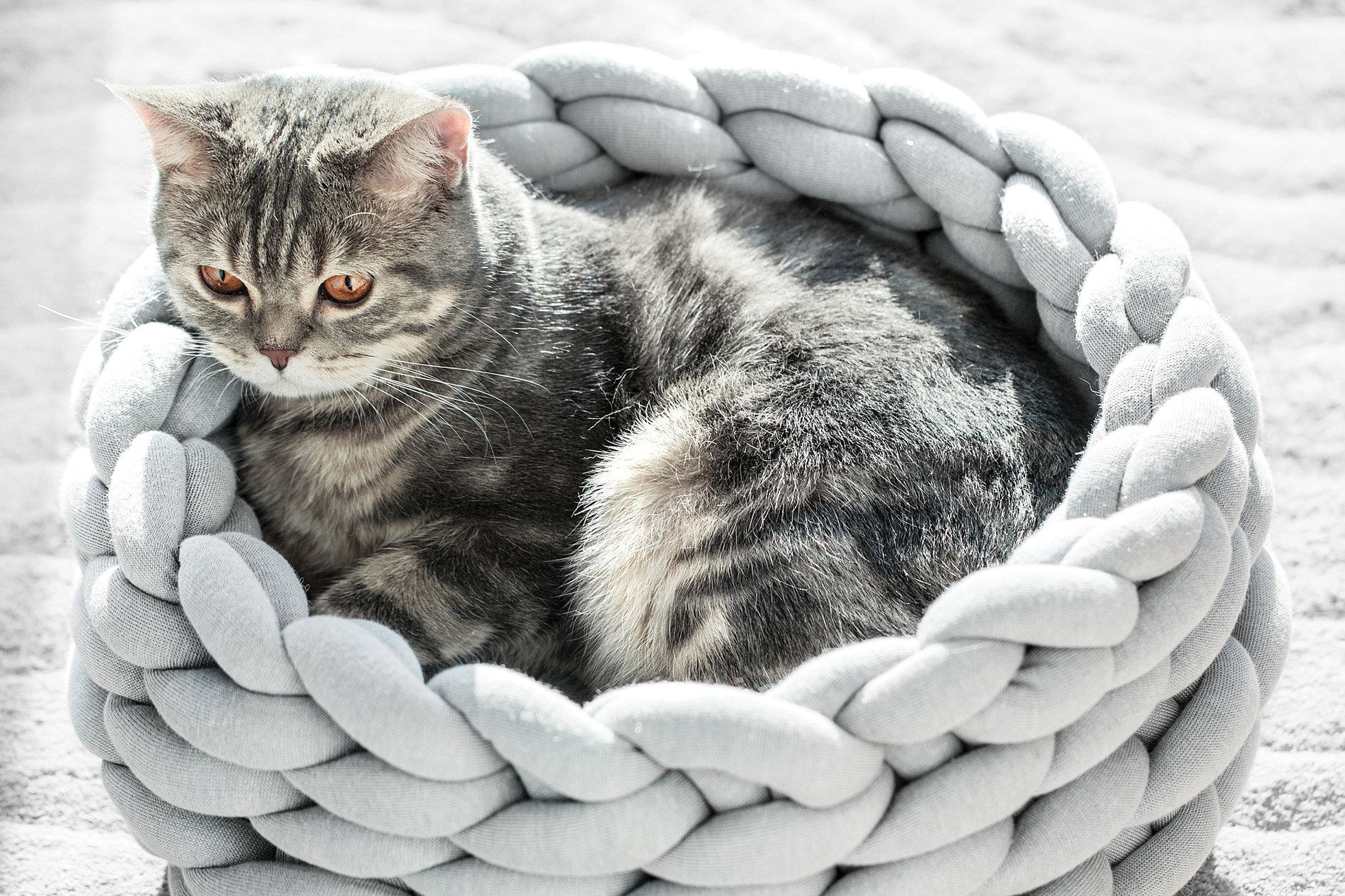 Ohhio Braid Pet Bed | Red Dot Design Award